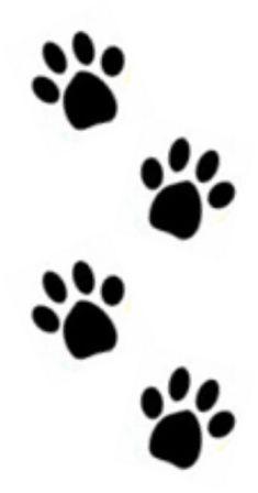 Four Paws Dog Training Club South Hinksey Oxford