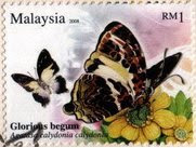 Butterflies Of Malaysia RM1 Glorious Begum