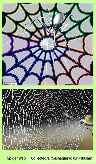 [Spider+Web.jpg]