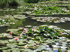 Monet&#39;s water lilies