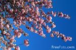 Elsker synet af forår:
