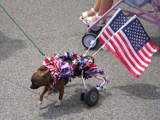 Patriotic Dog in Mentor Parade