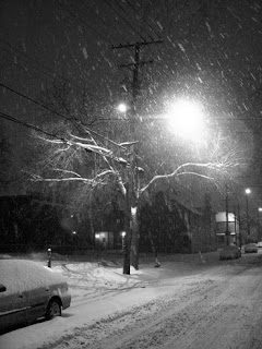 Snow Covered Tree in Tremont
