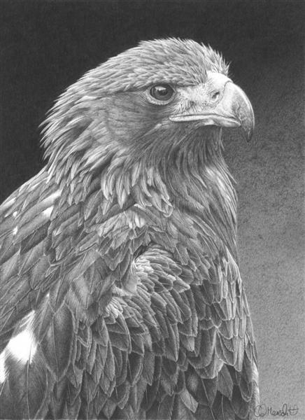 baby golden eagle pictures. aby golden eagle pictures.