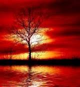 http://2.bp.blogspot.com/_aOFZ5IHhy1c/TJyIDYZipRI/AAAAAAAAADI/aJ7YglRCzwQ/s1600/reflection+tree.bmp
