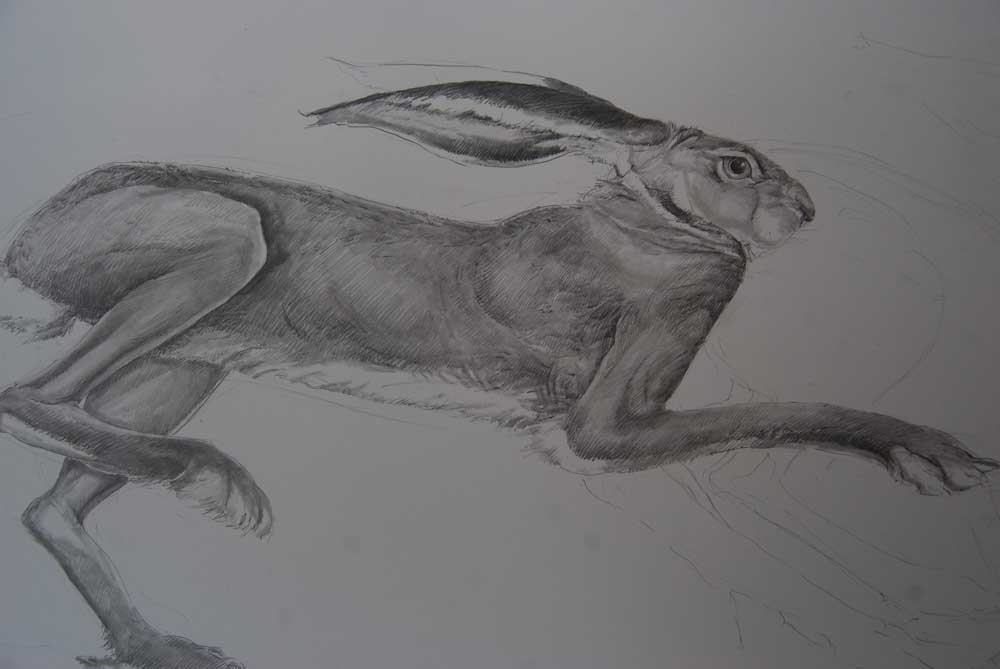 Hare Line Drawings Later When i Went to Feed