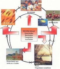 Ciclo Agroquímico