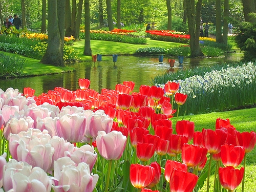 Keukenhof Gardens Amsterdam Netherlands