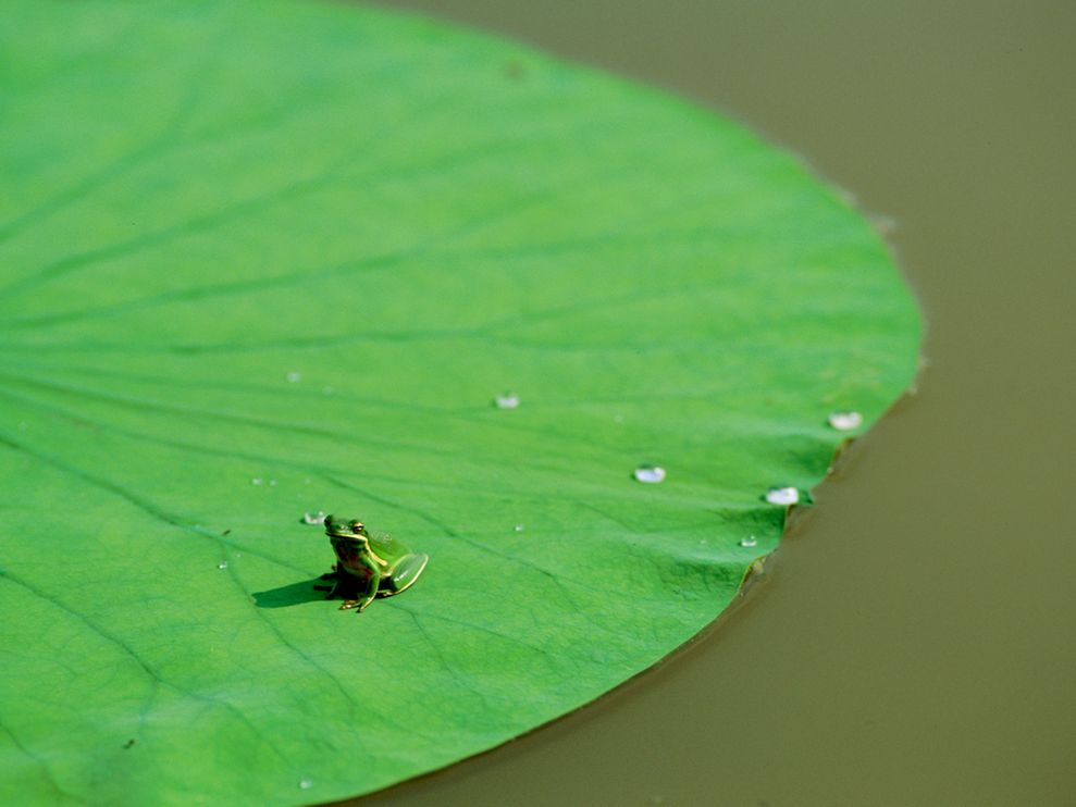 green-frog-blair_1421_990x742.jpg