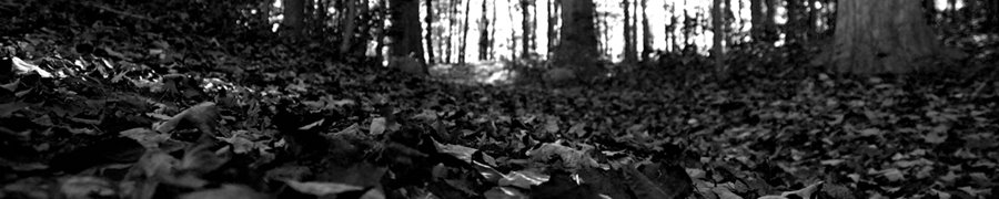 beware the leaves beneath your feet. they are not so idle.