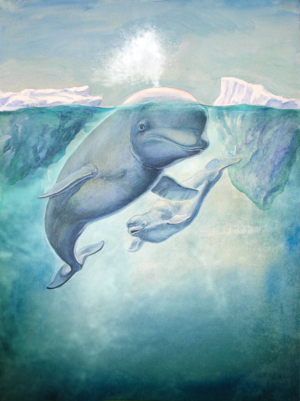 Baby beluga whale drawing