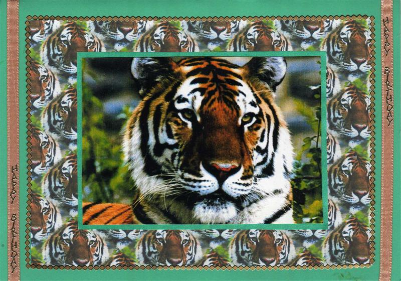 Janet And Megans Crafts Tiger Birthday Cards