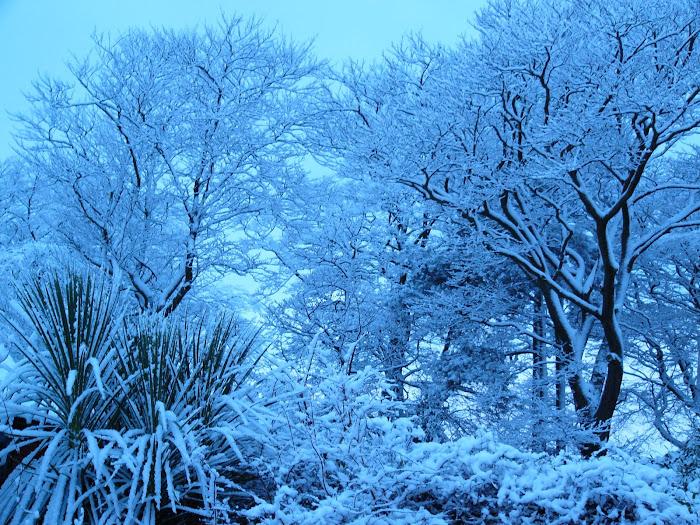 White Whitehills