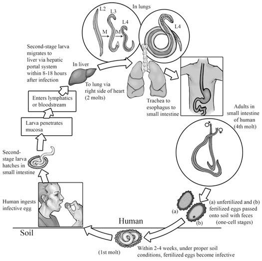 Microbiologia Y Parasitologia Humana Pdf