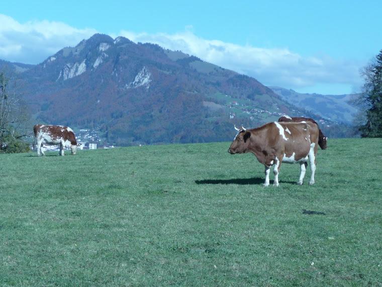 Estampa suiza