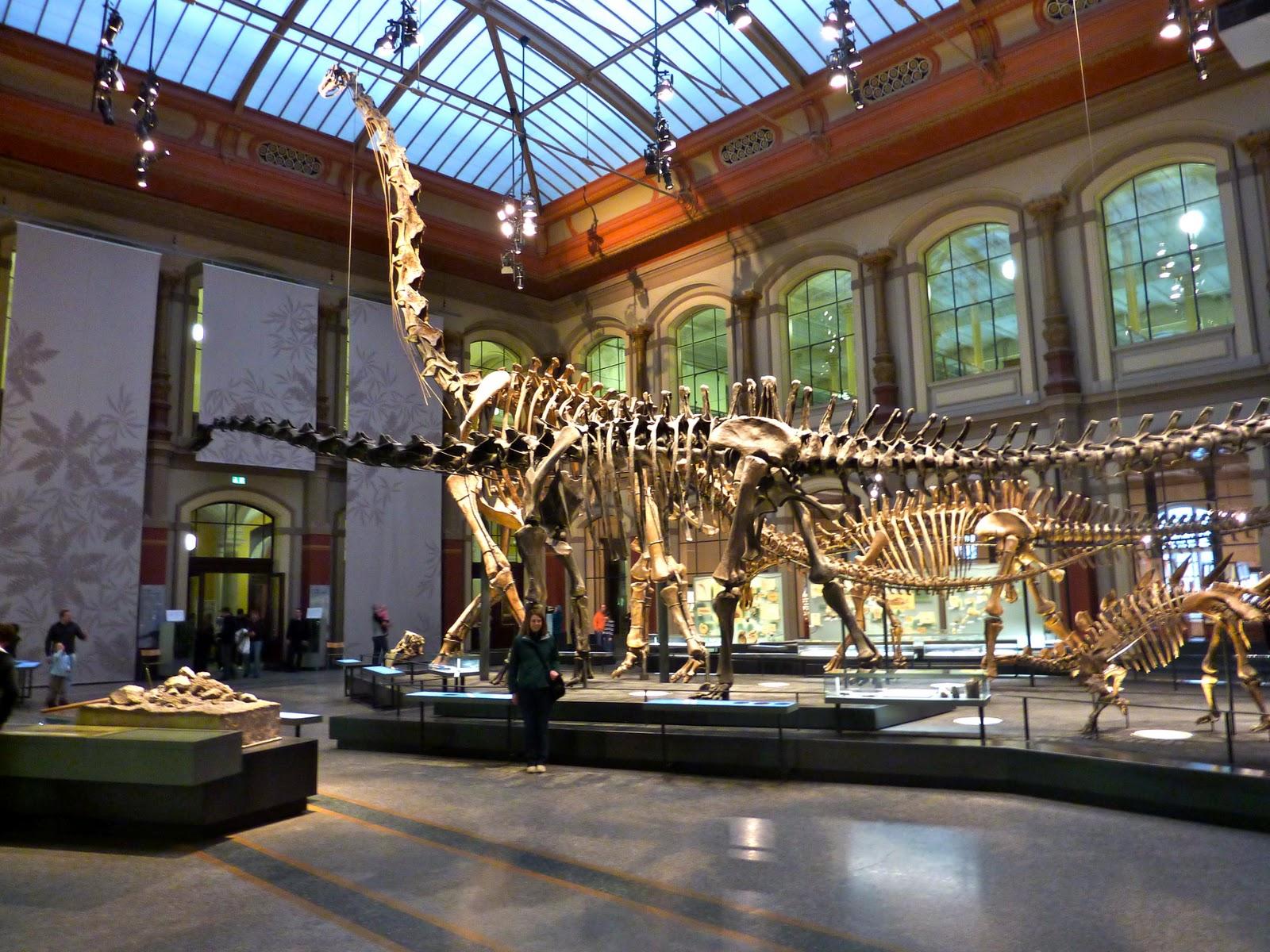 museum dinosaurus termegah  5 Museum Dinosaurus Termegah Di Dunia MuseumfurNaturkunde