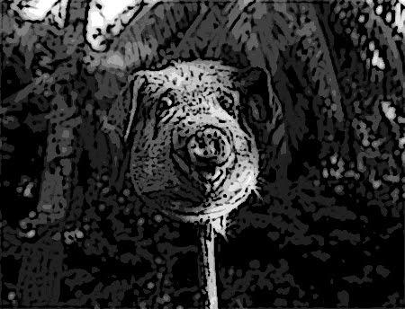 Piggylordofthefliescartoonlord