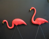 pink flamingos in their glory