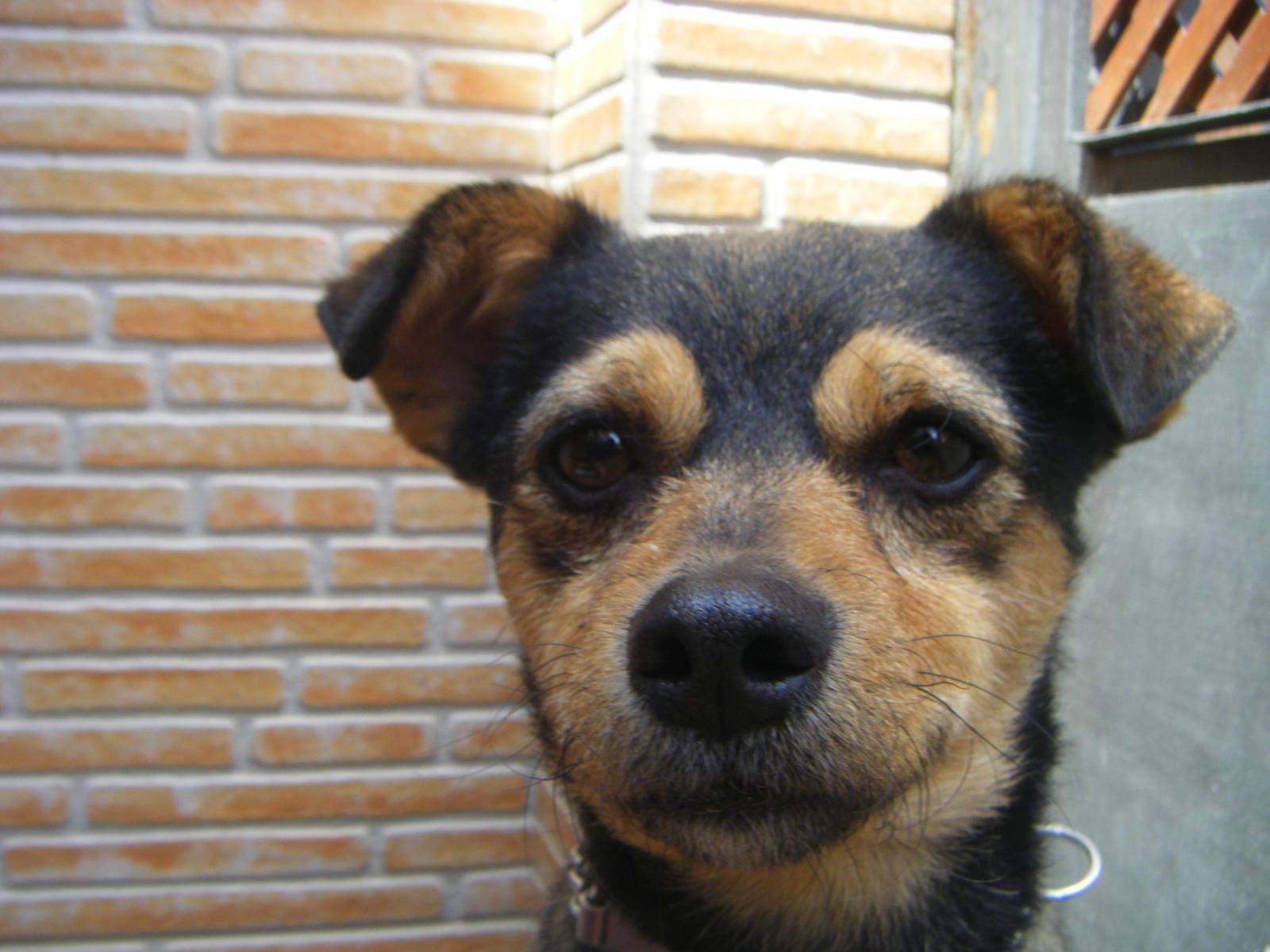 Caseta de perro for Caseta perro pequeno