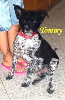 Urgente!!! Tommy ha poco tempo.
