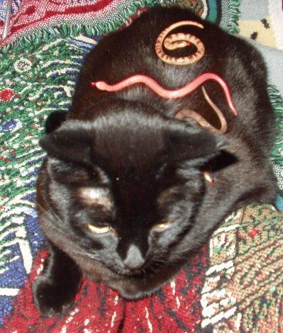 [snakesonacat]