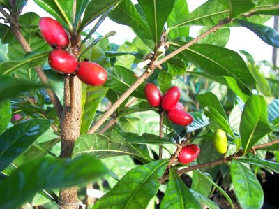 Tree 3 December 2010