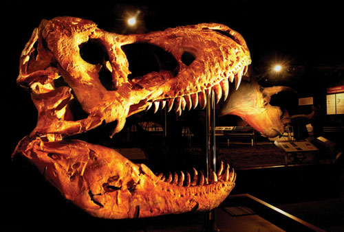 Visit FOSSIL-MUSEUM..