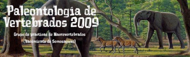 Paleontología de Vertebrados 2009