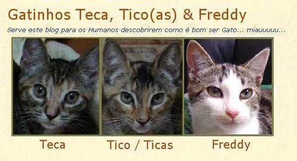 Gatinhos Teca, Ticas & Freddy