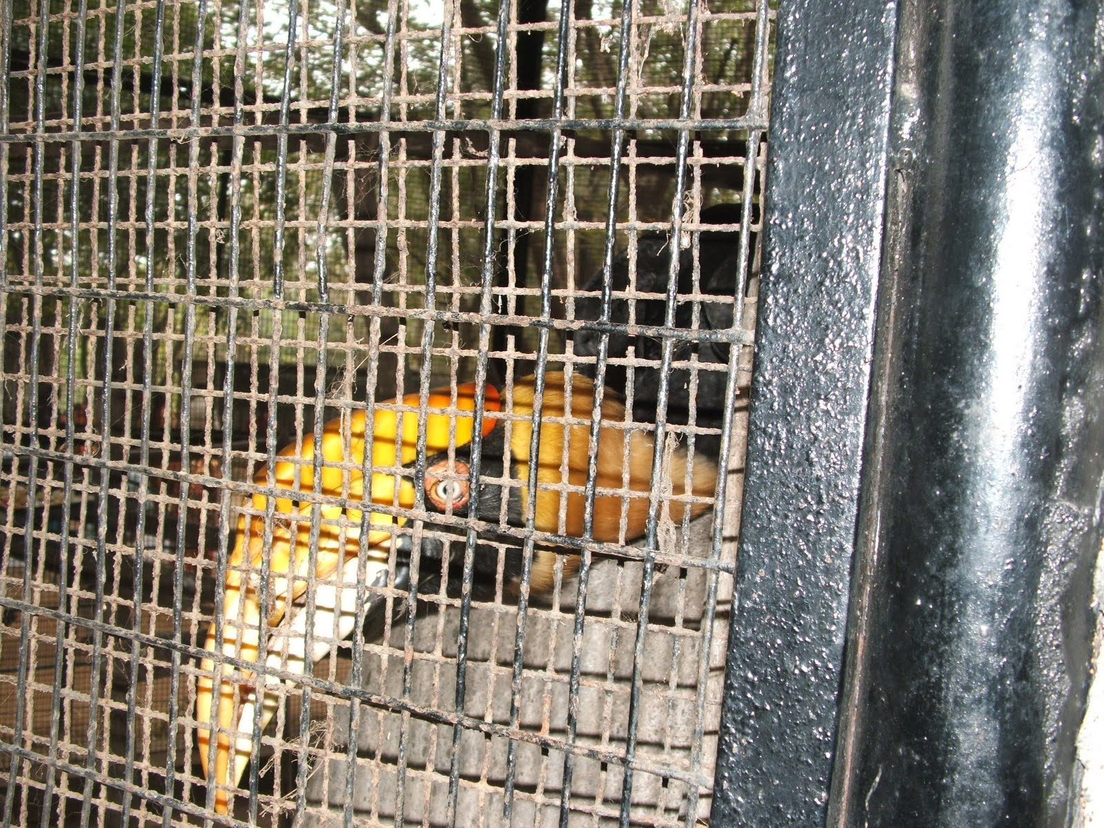 essay about vandalur zoo