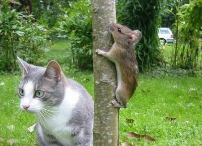 Funny Dogs and Cats Pictures