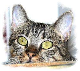 Ojos verdes, verdes como la albahaca...
