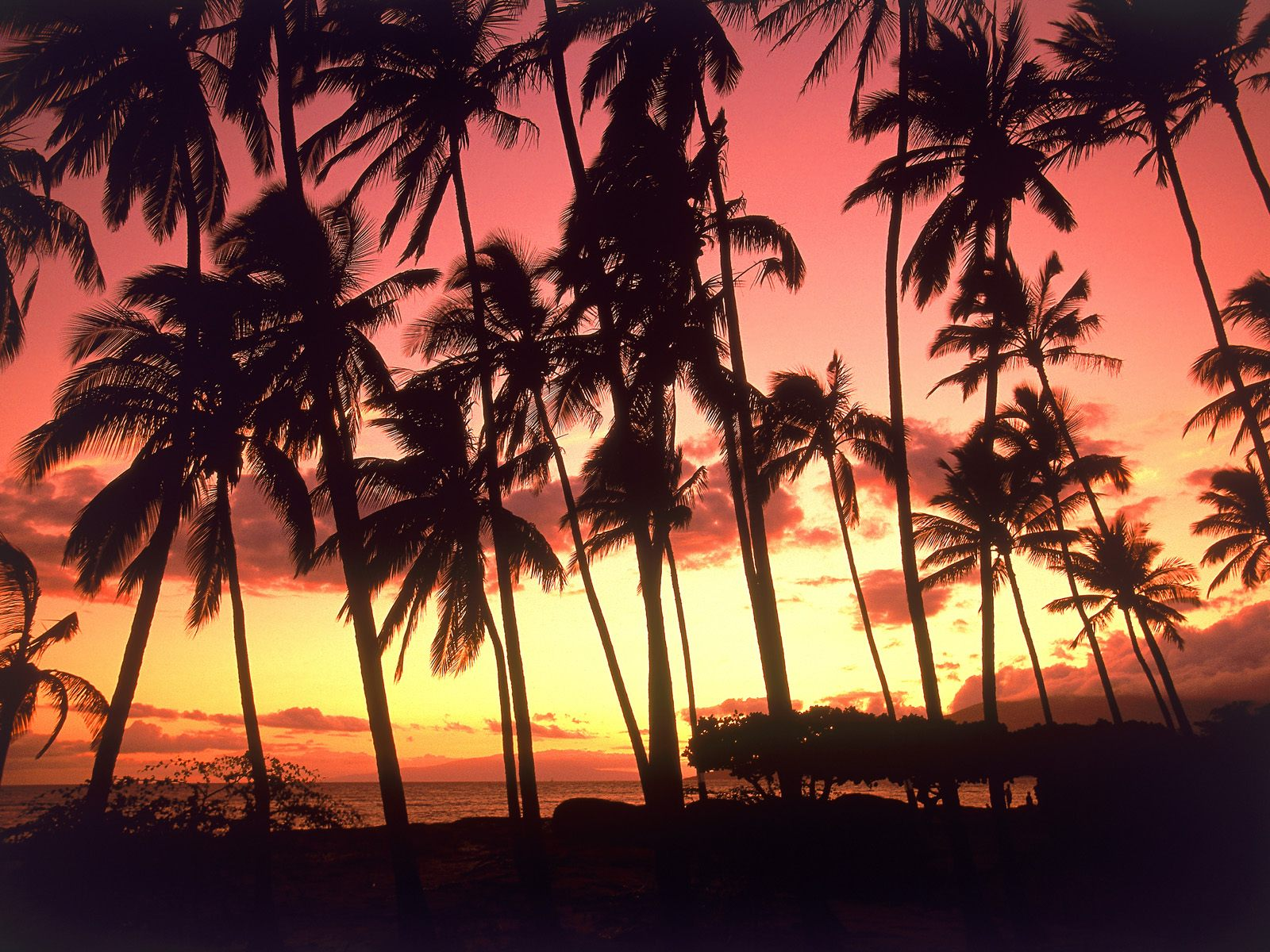 Discount+Hawaiian+Travel+Packages+7.jpg