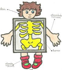 Aparatos e órganos