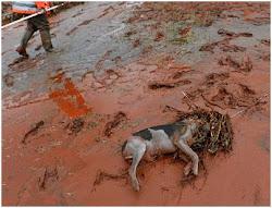 Động vật chết vì bô xít