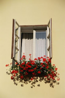 http://2.bp.blogspot.com/_ahw5m8lrDls/S8DXYjmR0VI/AAAAAAAAAN8/tewpzMTwPu0/s1600/65590013-flowers_and_window.jpg