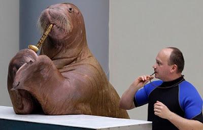 Sara the Walrus
