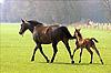 Pferd mit Fohlen - Wikipedia