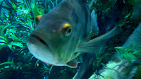 Enjoy Utah The Living Planet Aquarium