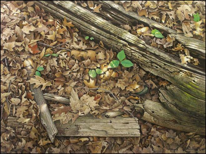 Forest Floor With Trillium, Cherryhill Gate. Royal Botanical Gardens Hamilton Ontario