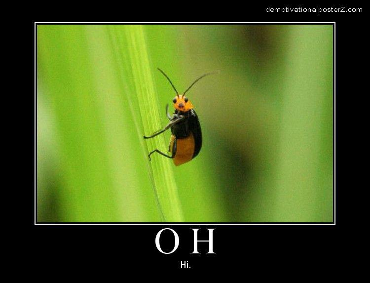 oh hi bug motivational poster