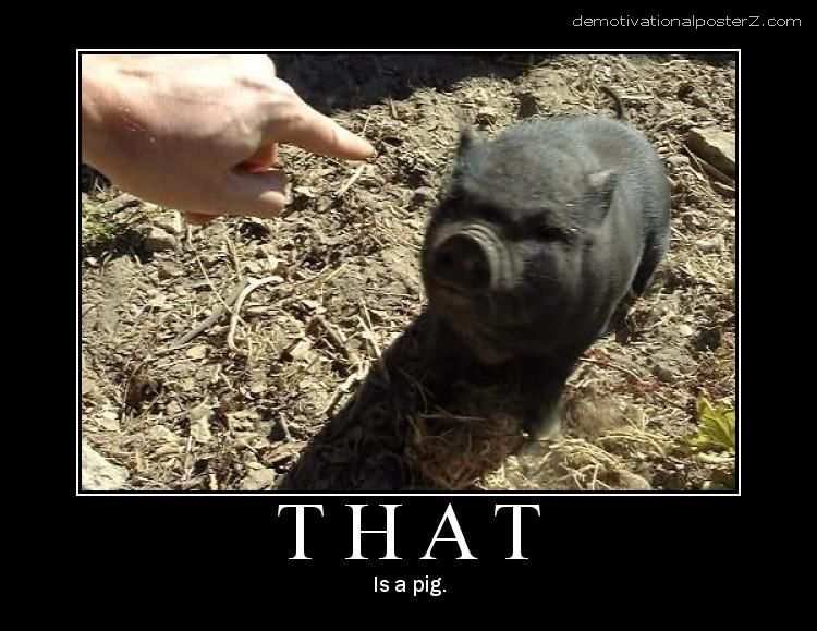 That is a pig