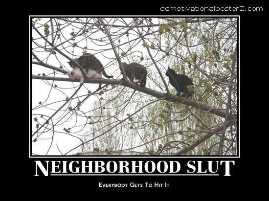 Neighborhood slut cat motivational