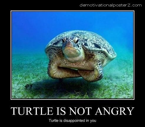 Turtle is not angry Turtle is disappointed in you