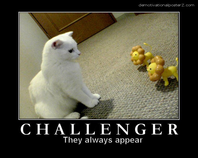 Challenger - they always appear cat