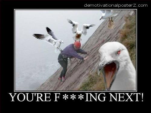 You're fucking next! sea gull motivational poster