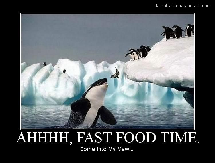 fast food time killer whale eating penguins