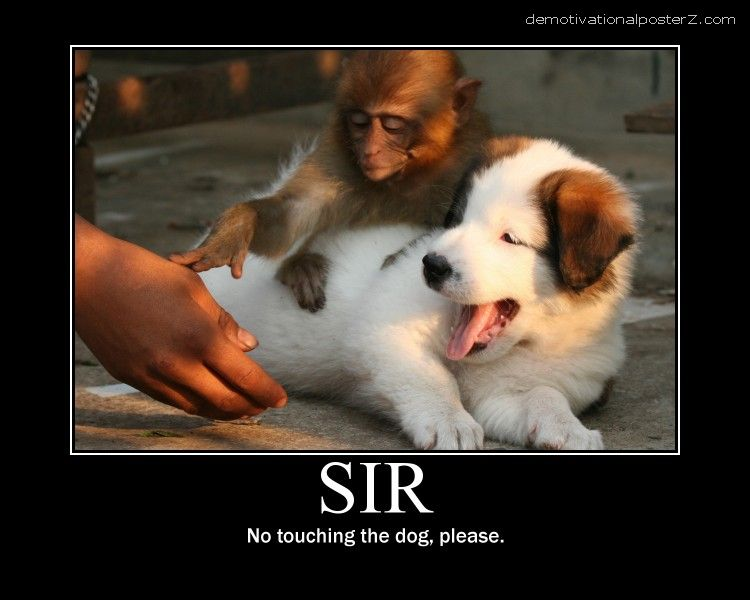 SIR, NO TOUCHING THE DOG, PLEASE monkey poster motivational