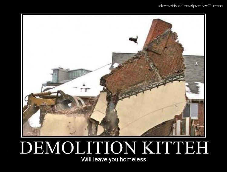demolition kitteh cat