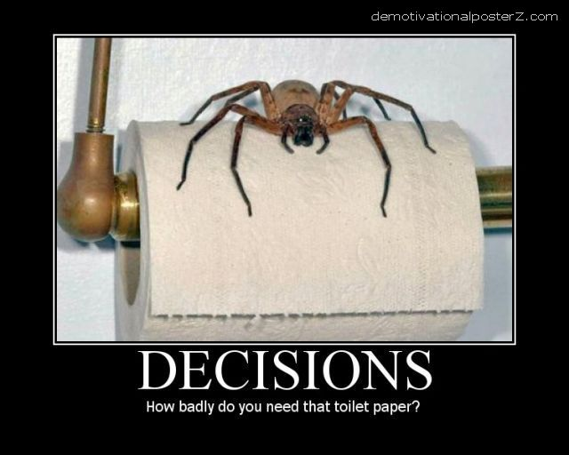 spider on toilet paper